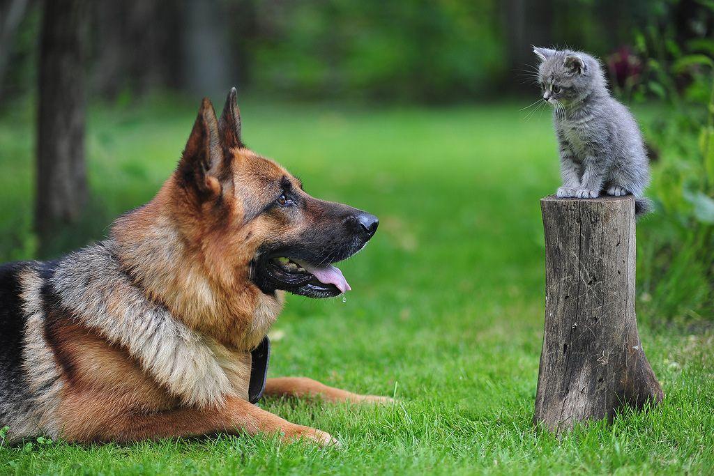 Кто лучше в качестве питомцев - кошки или собаки