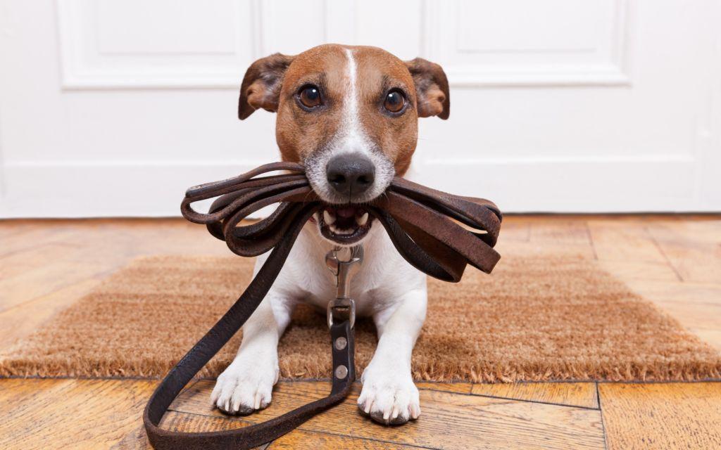 Как правильно приучить собаку ходить в туалет на улицу и советы специалиста