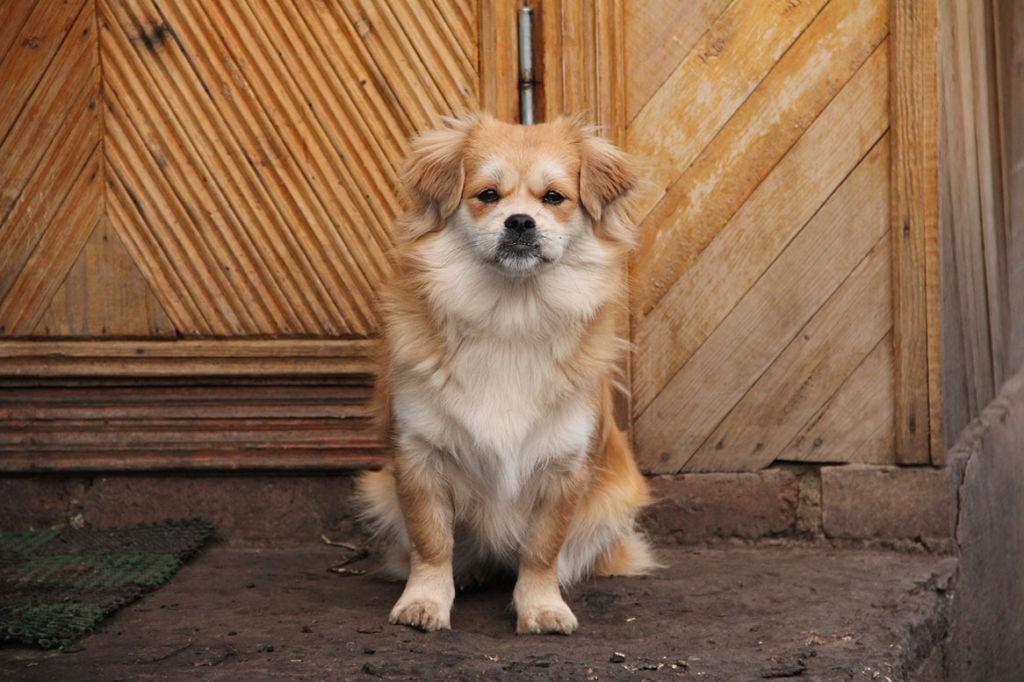 Беспородная собака имеет такое же право на красивое имя, как его породистый собрат