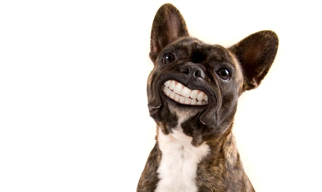 Часто причиной болезней ротовой полости являются наличии зубного налёта, камня