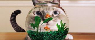 Почему вода в аквариуме мутная и что делать