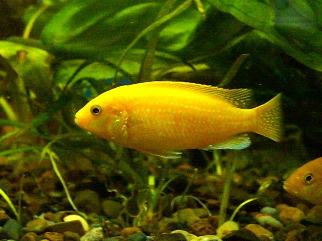 5 видов живого корма для аквариумных рыбок в домашних условиях