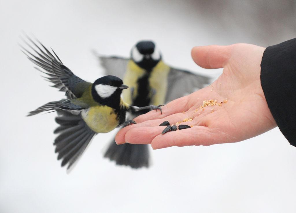 Нарушение человеком среды обитания птиц, приводит к уменьшению их численности